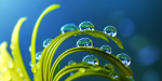 Macro :: a colourful photo gallery by Joakim Kræmer