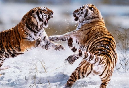 Conflict in nature: animal photos by Steve Bloom