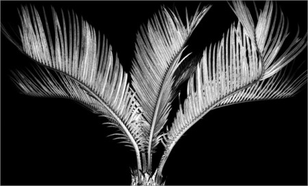 Resonances – black and white nature photos by Martin Miller