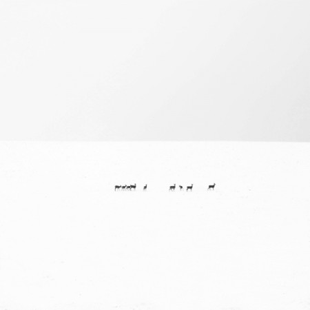 winterscapes – monochrome photos by Akos Major