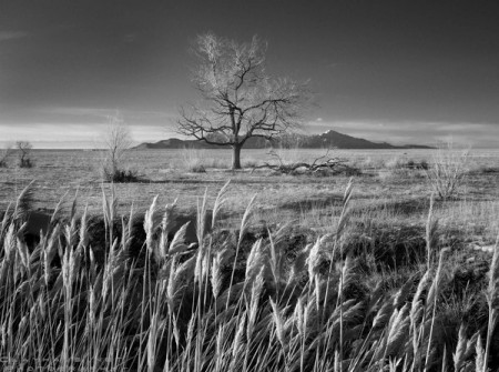 In a Different Light: photos of Utah's West Desert by Jeff Clay