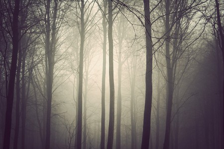 The Trees – monochrome forest photos from Kim Høltermand