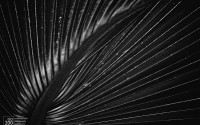 palm-leaf-abstract