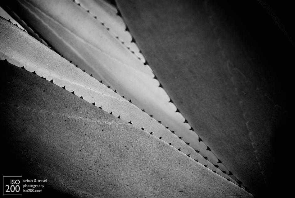 Black and white abstract photo of a spiky palm plant.