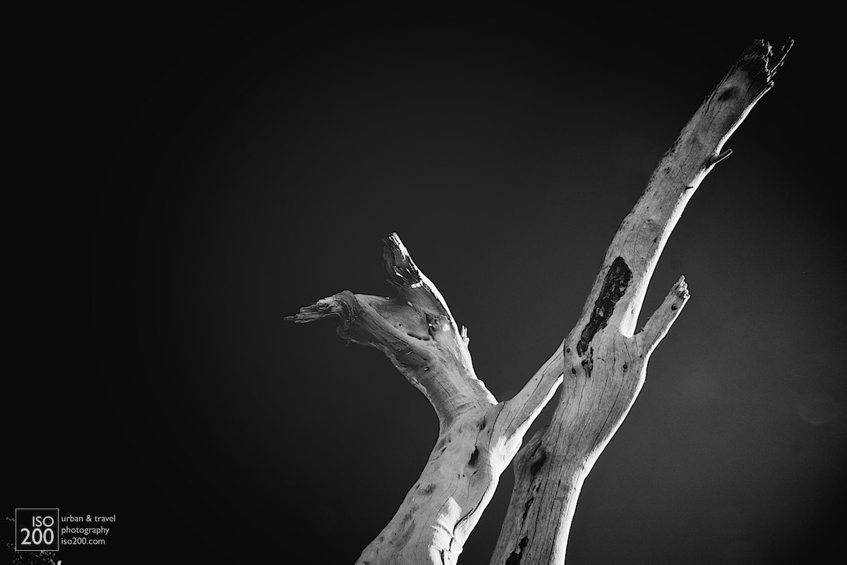 Semi-abstract black and white photo of a tree stripped bare of bark by sun sea and salt.