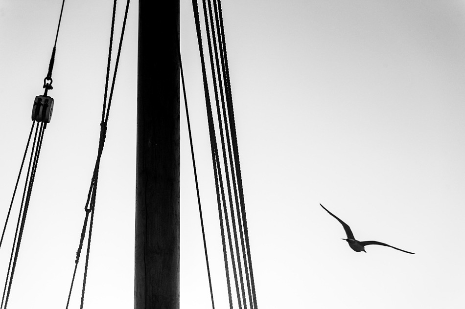Mast and seagull, Anstruther, Fife